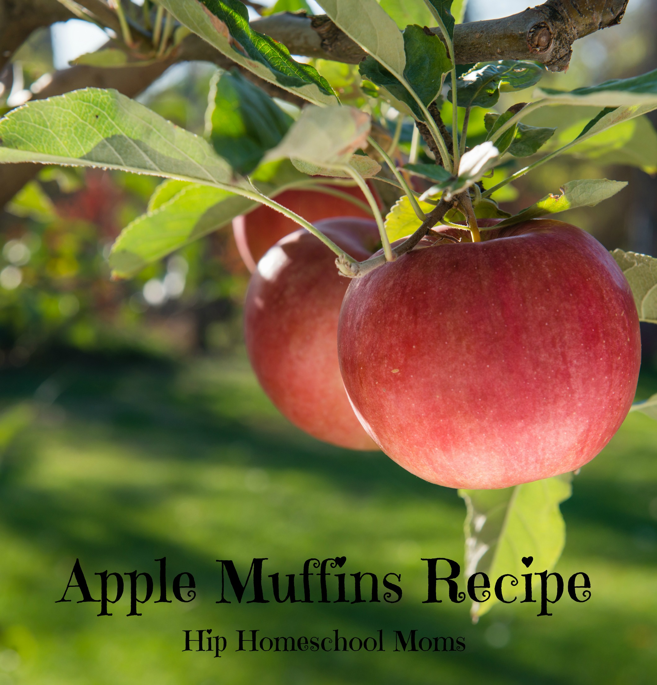 Apple Muffins Recipe from Hip Homeschool Moms