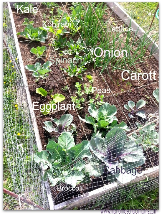There are several types of homeschool gardens. I like to garden in boxes. | Hip Homeschool Moms