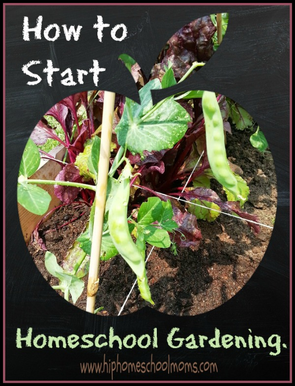 How to start homeschool gardening. it's gonna dd so much to homeschooling! | Hip Homeschool Moms