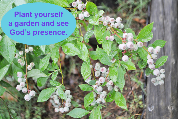 Plant yourself a garden and see God's presence