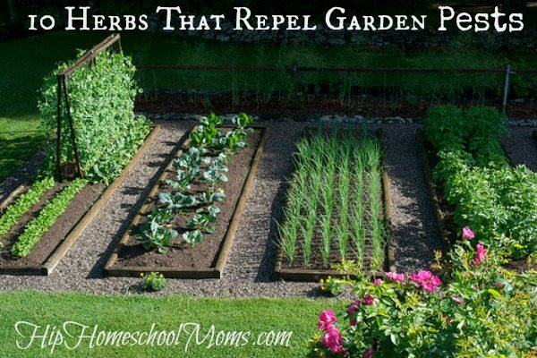 garden with beautifully laid out rows