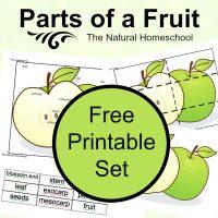 Fruit-Printable