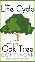 Oak-Tree-Life-Cycle-Copywork