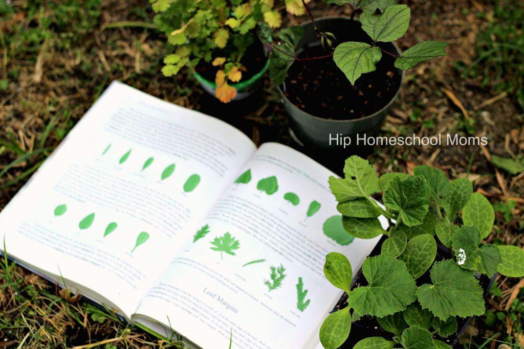 apologia leaf identification modified