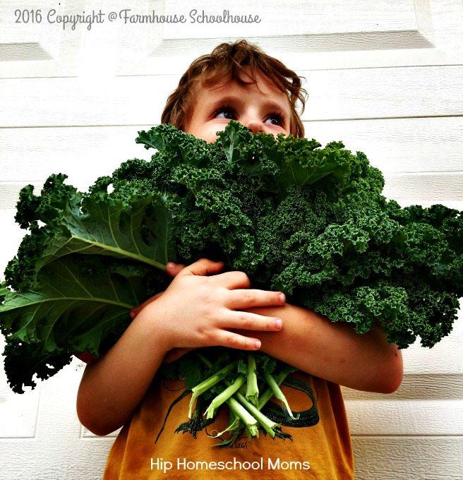 garden kale modified