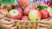 boy holding basket of apples