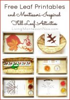 HHMFree-Leaf-Printables-and-Montessori-Inspired-Fall-Leaf-Activities