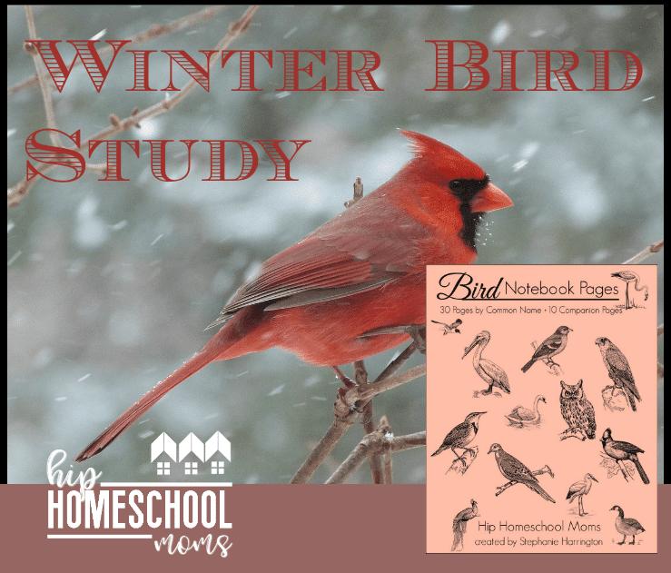 Winter Bird Study | Notebooking