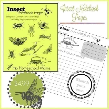 Insect Notebook Pages