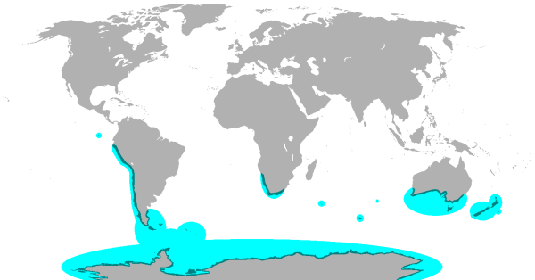 Where penguins live for penguin study
