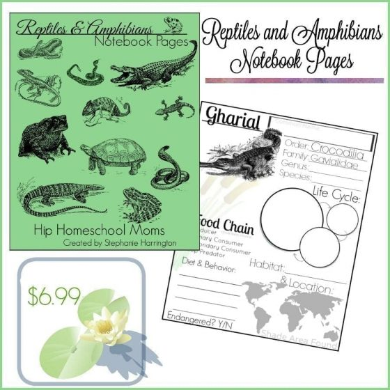 Reptiles and Amphibian Notebook Pages