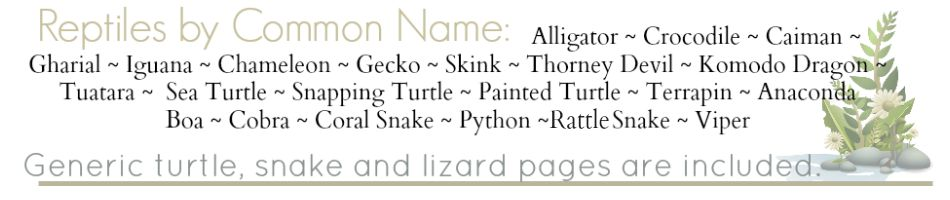 Reptile Notebook Pages