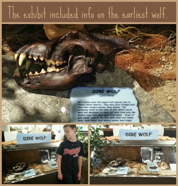 Ice Age Exhibit Dire Wolf