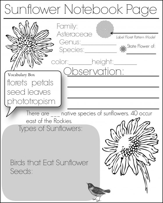 Sunflower Fact Page
