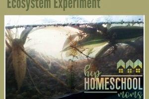 Ecosystem Experiment