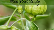This is a fun mini unit study on tomatillos!