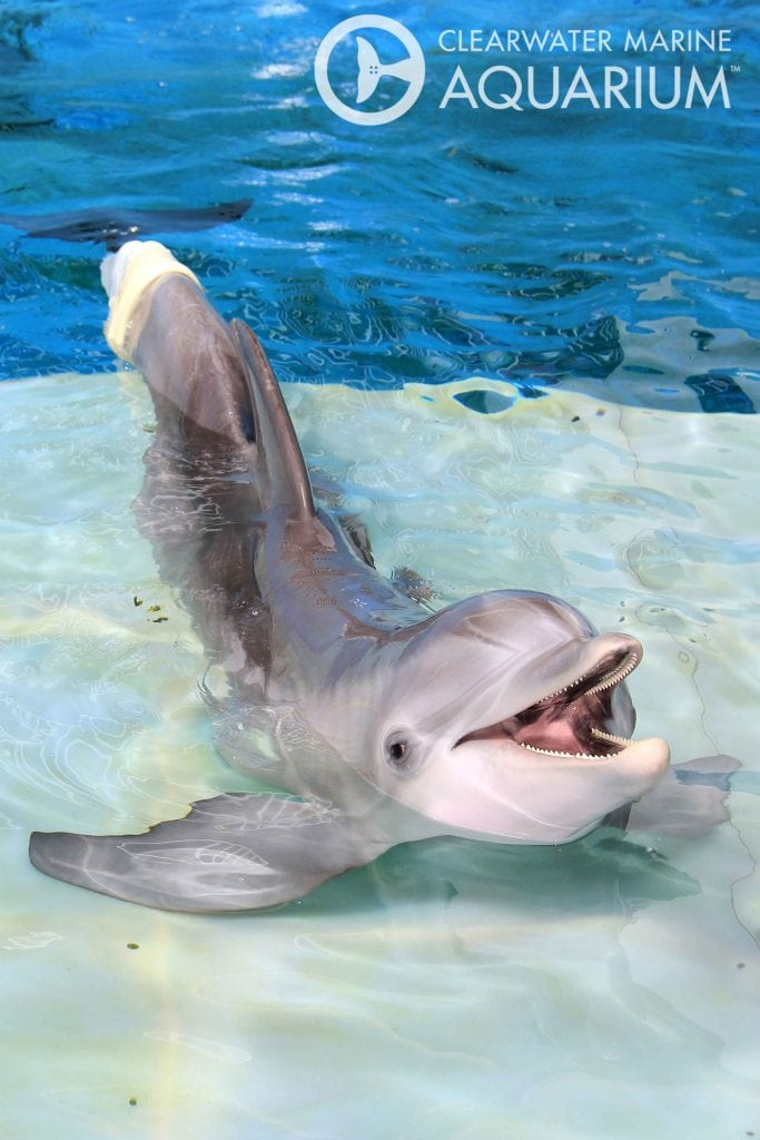 8 Reasons to Visit Clearwater Marine Aquarium | Hip Home Moms on