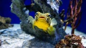 exhibit at the Georgia Aquarium