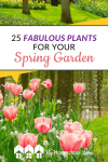 You may be wondering where to begin with your spring garden. You probably need a spring planting list! I have found a spring planting list to be helpful. Here are 25 Fabulous Plants for Your Spring Garden #Gardening #Spring #Plants