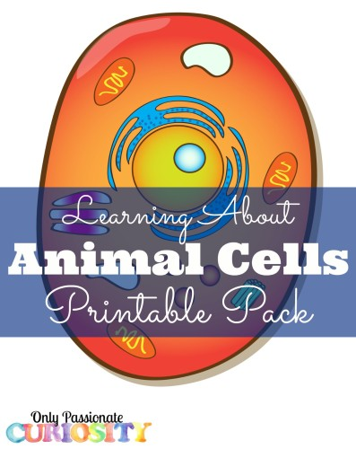 Animal Cells Printable Pack 397x500 1